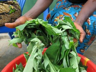Die Wurzelknollen des Maniok kommen ursprünglich aus Südamerika, werden aber auch im Kongo angepflanzt und zu einem Art Kloßteig, dem Fufu, verarbeitet. Bei der Zubereitung werden erst die Blätter abgetrennt