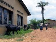 Obwohl Nsioni eine Stadt ist, sind 80 Prozent der Menschen von der Landwirtschaft abhängig