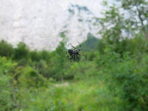 Eine Spinne spannt ein Netz über den Weg im Valle Chialedina